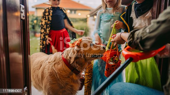 Costumed dog on a trick or treating adventure with kids