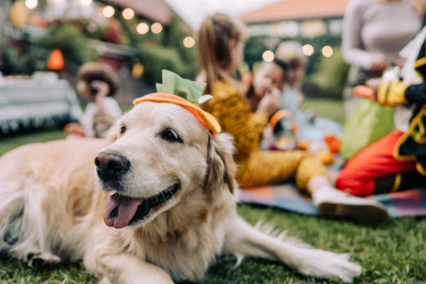 Trick or treat? Costumed dog on a trick or treating adventure with kids pet clothing stock pictures, royalty-free photos & images