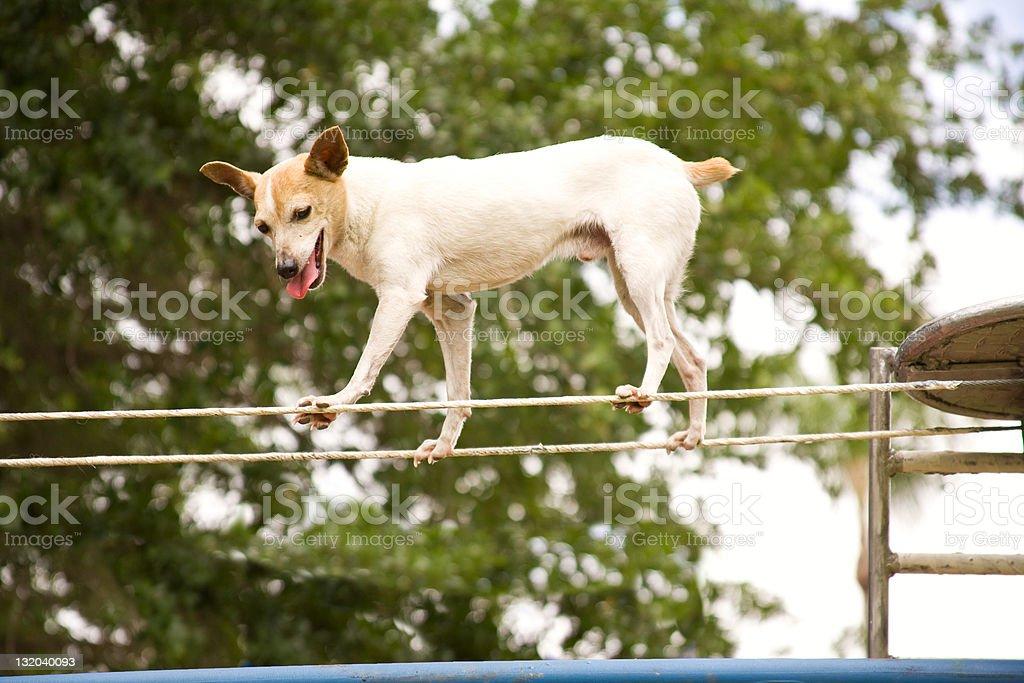 Trick Puppy stock photo