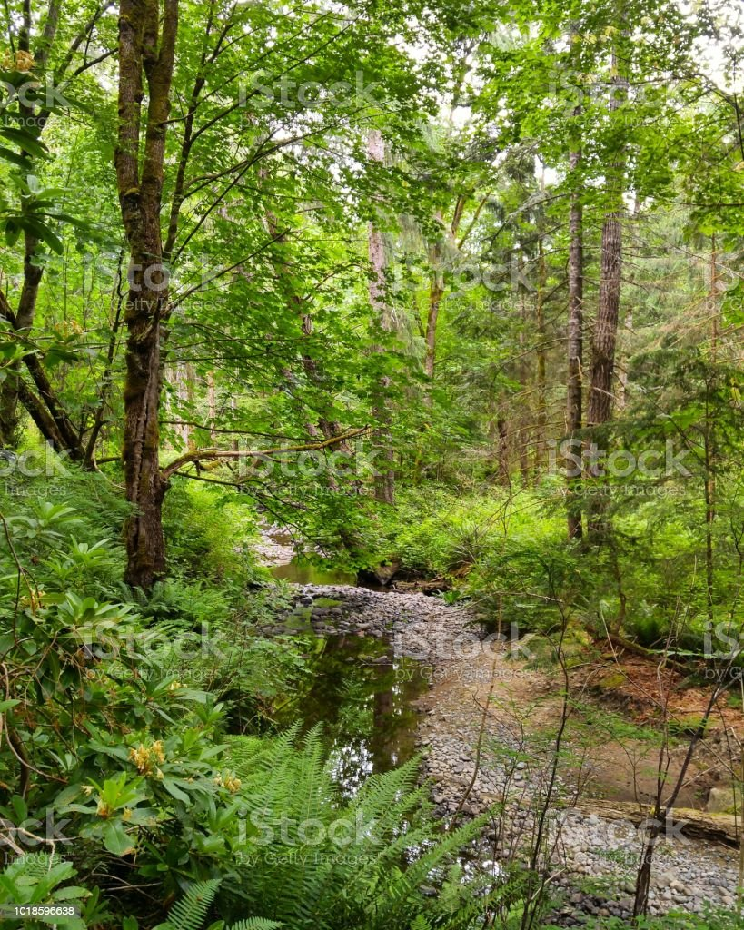 A trickling creek in a lush forest stock photo