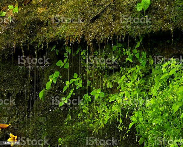 Photo of Trickling