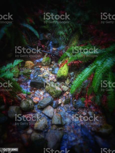 Photo of trickling stream