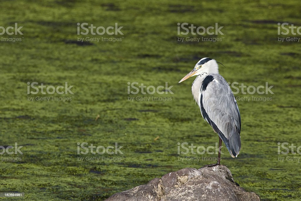 Tricky Fishing stock photo