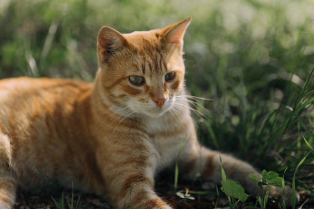 Tricky ginger cat stock photo