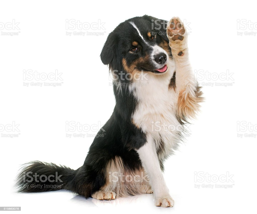 How To Get A Dog Training License