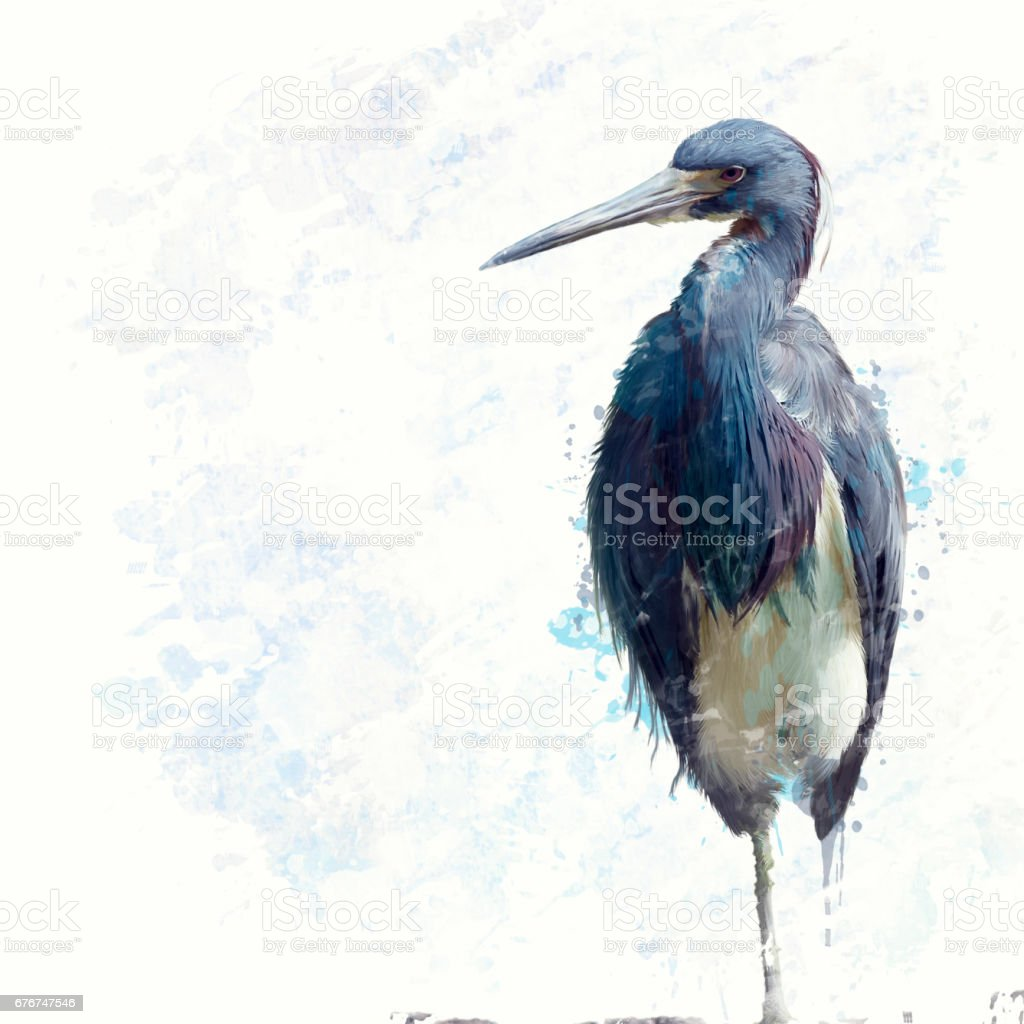 Tricolored Heron watercolor stock photo
