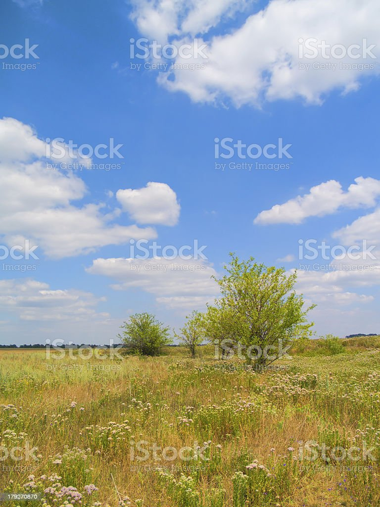 Tries at steppe royalty-free stock photo