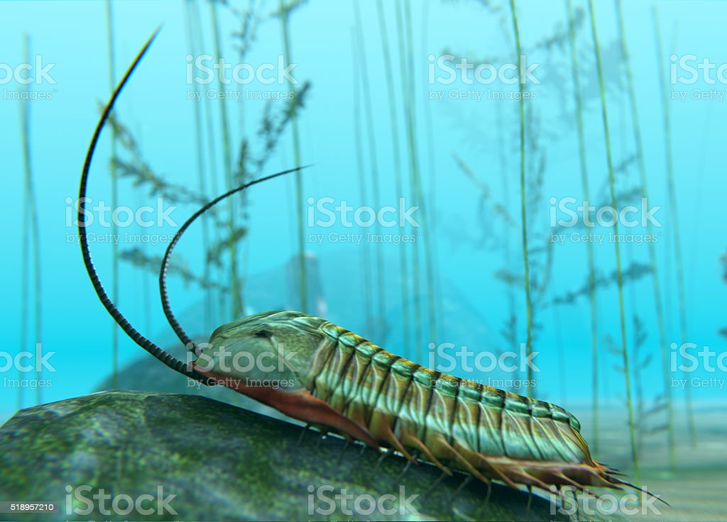 Trilobite On Sea Bottom stock photo