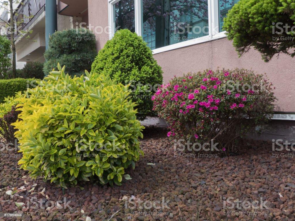 Getrimmten Sträucher Garten Keine Menschen Stockfoto Und Mehr Bilder
