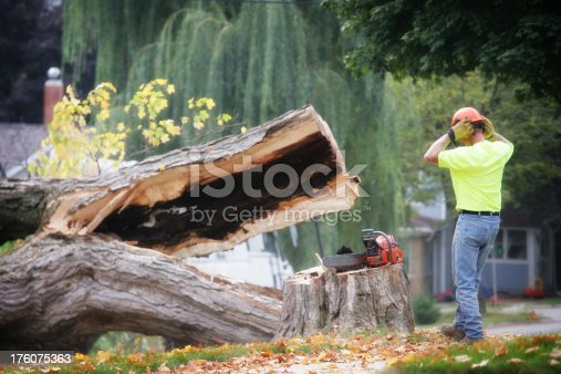 Tree trimmer stands watching at the moment a large dead tree falls.  Visible amount of sawdust in the air.  This is just the moment when the tree hit the ground and split open.