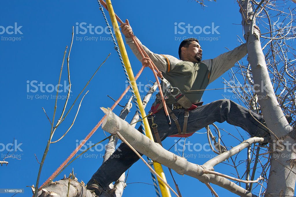 Trimming a Tree Safely royalty-free stock photo