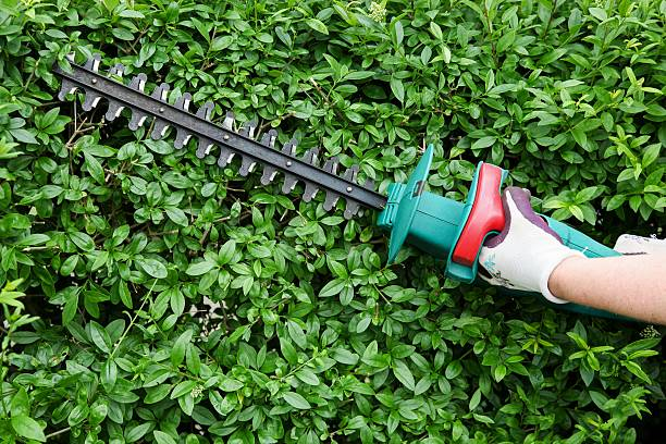 Trimming garden hedge Trimming garden hedge with electrical hedge trimmer hedge clippers stock pictures, royalty-free photos & images