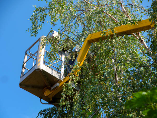 Trimming the branches of the trees in the gardens with the use of elevation An employee using a pruning shears and a mechanical saw cuts branches of trees service occupation stock pictures, royalty-free photos & images