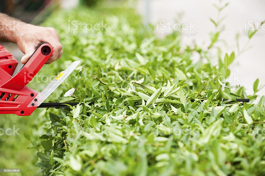 Trimming the Bushes royalty-free stock photo