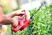 Man trimming hedge using  strimmer