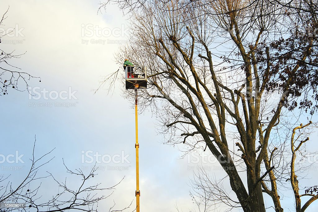 Trimming Trees stock photo