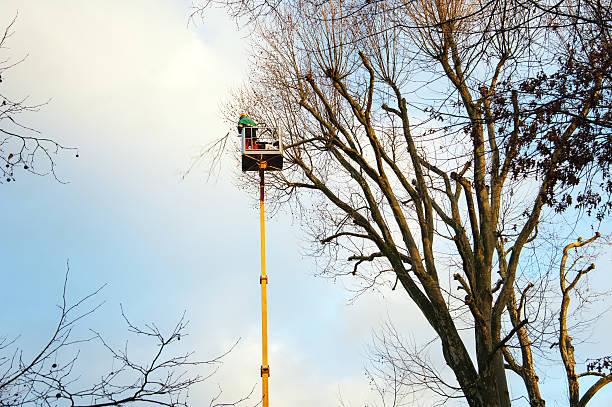 schneiden bäumen - rudermaschine stock-fotos und bilder