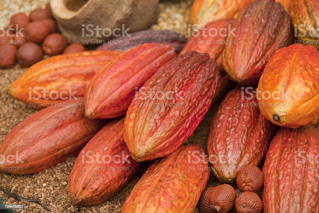 Trinitario Cocoa Pods stock photo