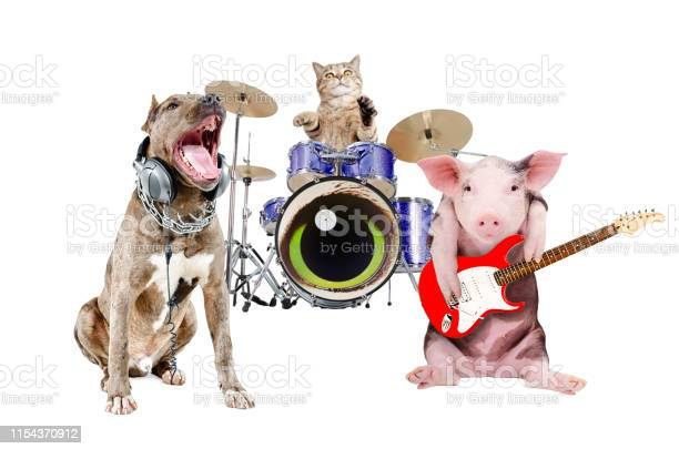 Trio of animal musicians picture id1154370912?b=1&k=6&m=1154370912&s=612x612&h=3s68wkpdfrc4hp9pooicgkukuk9nruy37bwjrpuxavq=