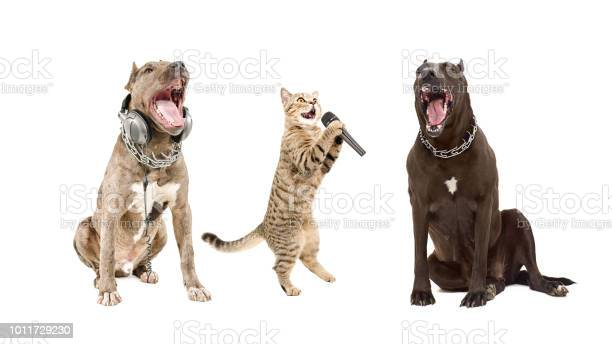 Trio of singing animals picture id1011729230?b=1&k=6&m=1011729230&s=612x612&h=hvfcxowsp3yoxap fpnnkol88yxmsxihhhogr5xzt4u=