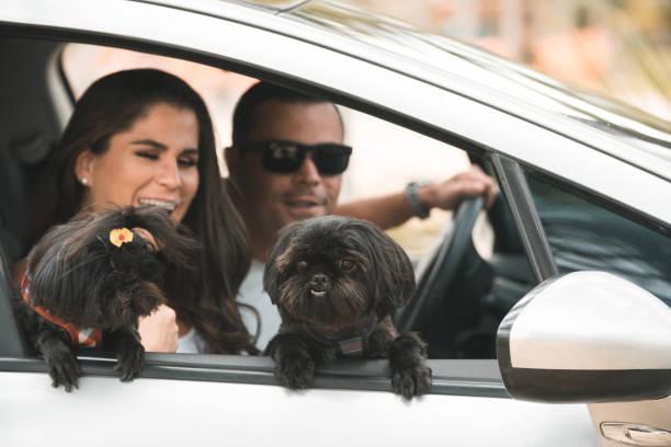 eine reise mit dem auto mit den schönen hunden - autoschleifen stock-fotos und bilder