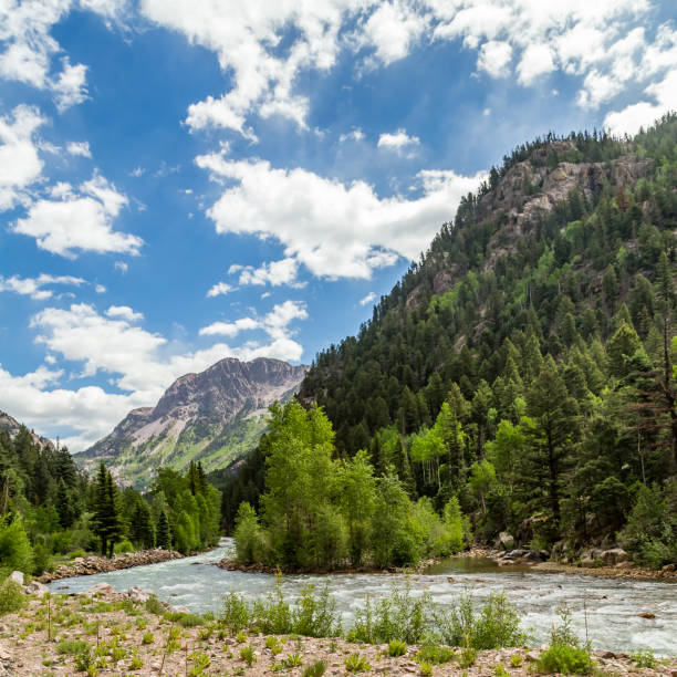 A trip up the Animas River A train ride leaving from Rockwood Depot along the Animas River outside of Durango, Colorado. animas river stock pictures, royalty-free photos & images