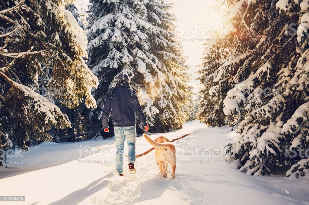 Trip with dog to winter nature stock photo