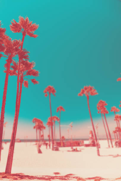 tripical beach with palm trees. holiday and vacation concept. california landscape. surreal coral toning - поп арт стоковые фото и изображения