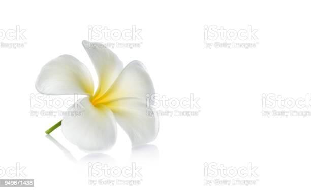 Tripical flower picture id949871438?b=1&k=6&m=949871438&s=612x612&h=uvp18lhqbgczzun0s4dw8wscmxnwzi r7vqjlqgt7eq=