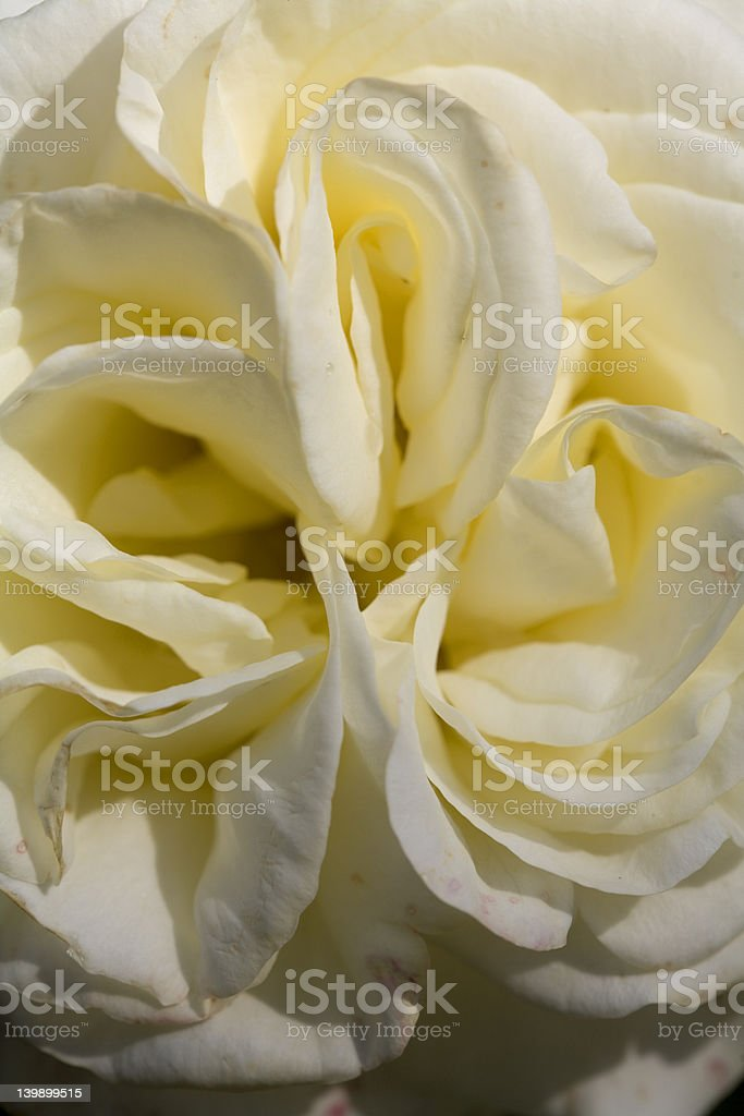 Triple Fold Flower royalty-free stock photo