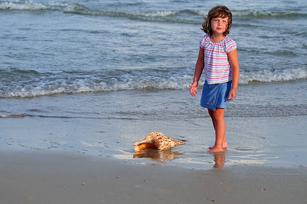 triton's trumpet (charonia tritonis) series - little girl picking up sea shells at the beach stock pictures, royalty-free photos & images