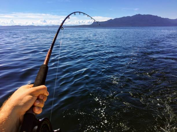 trolling for salmon - chinook salmon stock photos and pictures