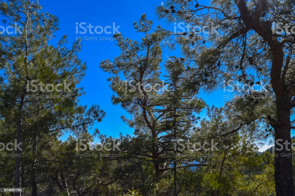 Troodos mountains and beautiful forest. Cyprus island royalty-free stock photo