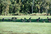 Troop of kangaroos lying under tree's shadow. Summer, sunny day