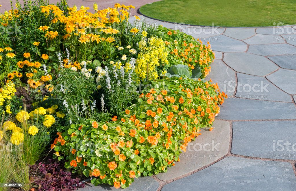 Tropaeolum majus and Rudbeckia hirta stock photo
