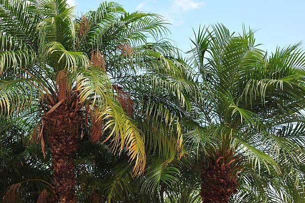 Tropic palm trees stock photo