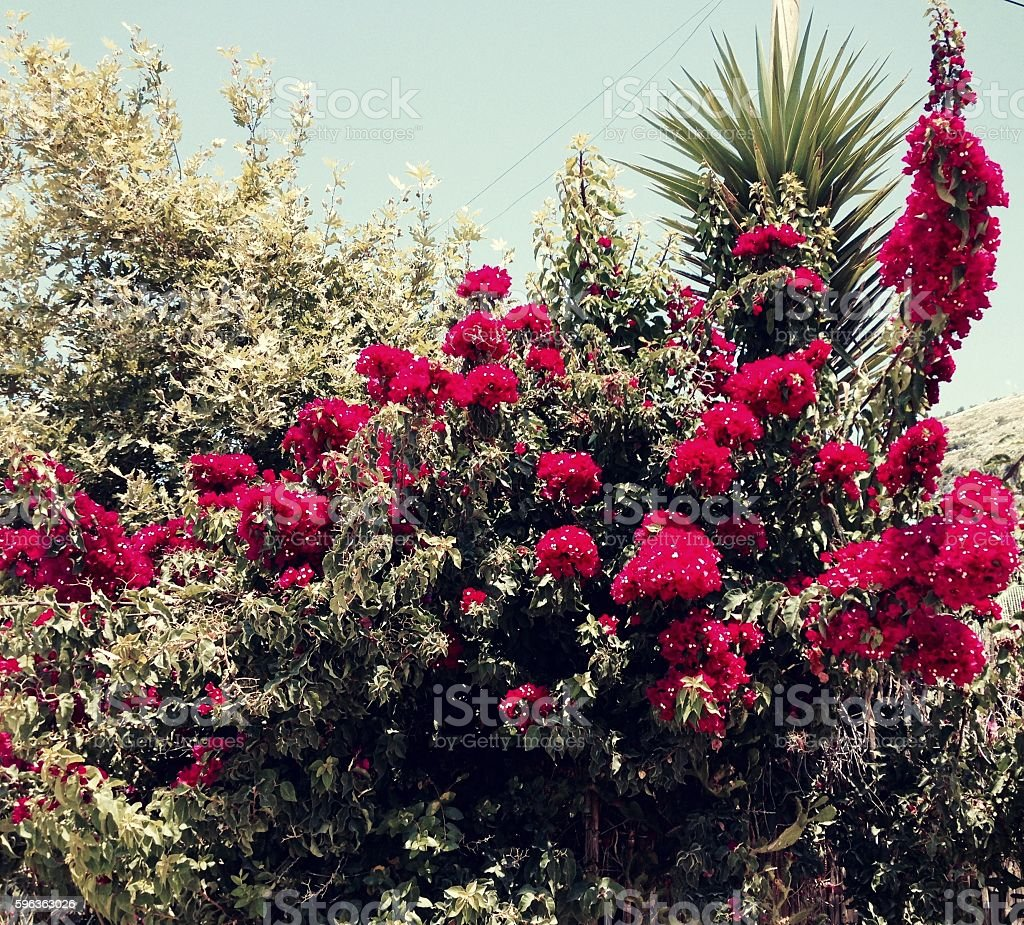 Tropic red flowers royalty-free stock photo