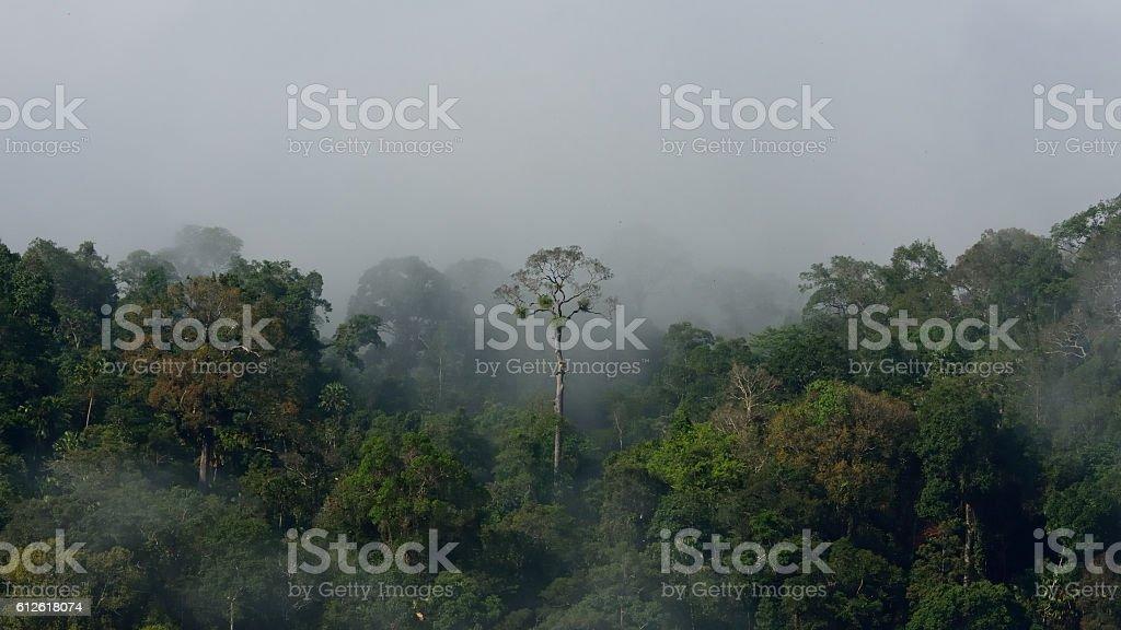 Tropical Amazon forest landscape stock photo