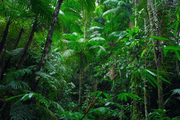 Tropical Amazon Forest Tropical Amazon Forest rainforest stock pictures, royalty-free photos & images