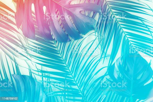 Tropical and palm leaves in vibrant gradient holographic colors art picture id1148759102?b=1&k=6&m=1148759102&s=612x612&h=lr3rxerjptp6r2ywup8w9ugowyxeinjyshgfdqm5aak=