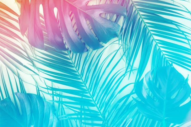 tropical and palm leaves in vibrant gradient holographic colors. minimal art surrealism concept. - summer стоковые фото и изображения