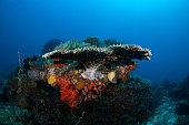 Tropical aquarium, tropical waters sea anemone macro close up tentacles underwater