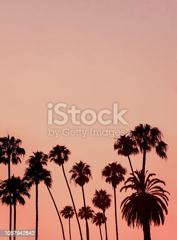 Vacation Background Image If Palm Trees at Sunset With Copy Space