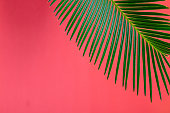Tropical Background Palm Trees Branches. Holiday. Travel. Copy space