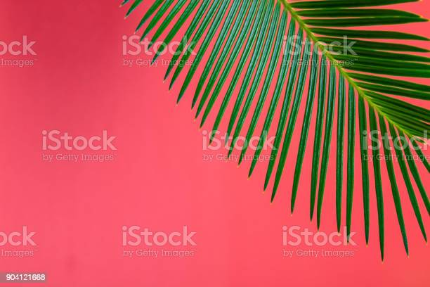 Tropical background palm trees branches holiday picture id904121668?b=1&k=6&m=904121668&s=612x612&h=iz3wbyvnoipn5xr8iarkq980za8dscxhbcvvpxa32g0=