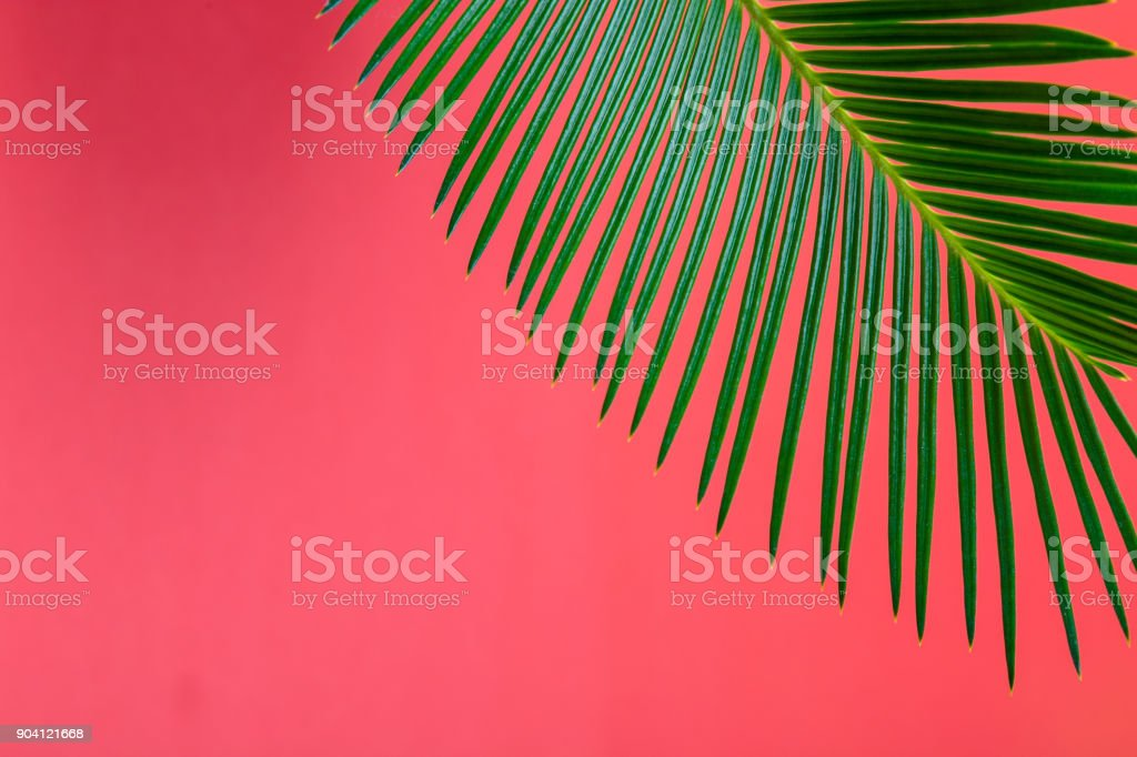 Tropical Background Palm Trees Branches. Holiday. stock photo
