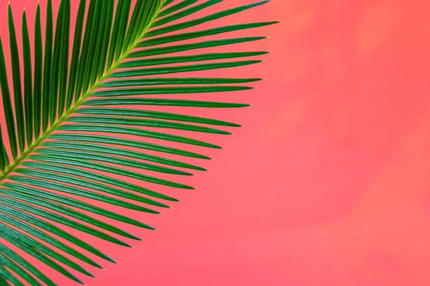 tropical background palm trees branches. holiday. travel. copy space. - folha de caderno imagens e fotografias de stock