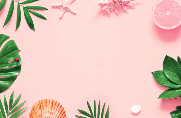 tropische achtergrond. palm bomen takken met zeesterren en schelp op roze achtergrond. reizen. - pink and orange seashell background stockfoto's en -beelden