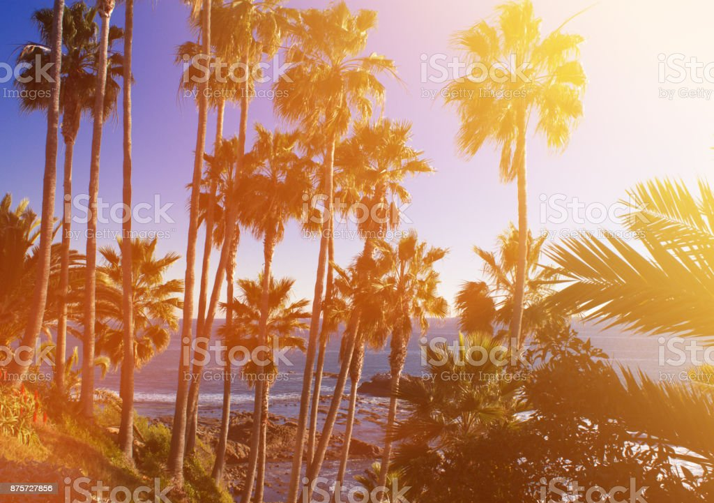 tropical background palm trees sun light holiday travel design card filter pastel effect. stock photo