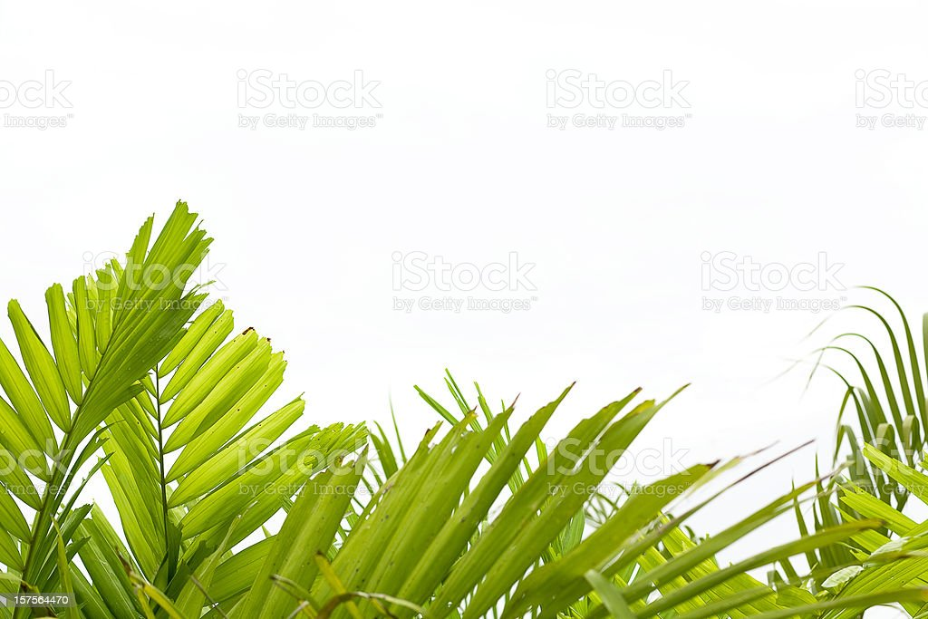 Tropical Background stock photo